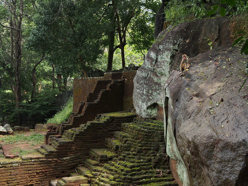 Sigiriya, monkey on the rock