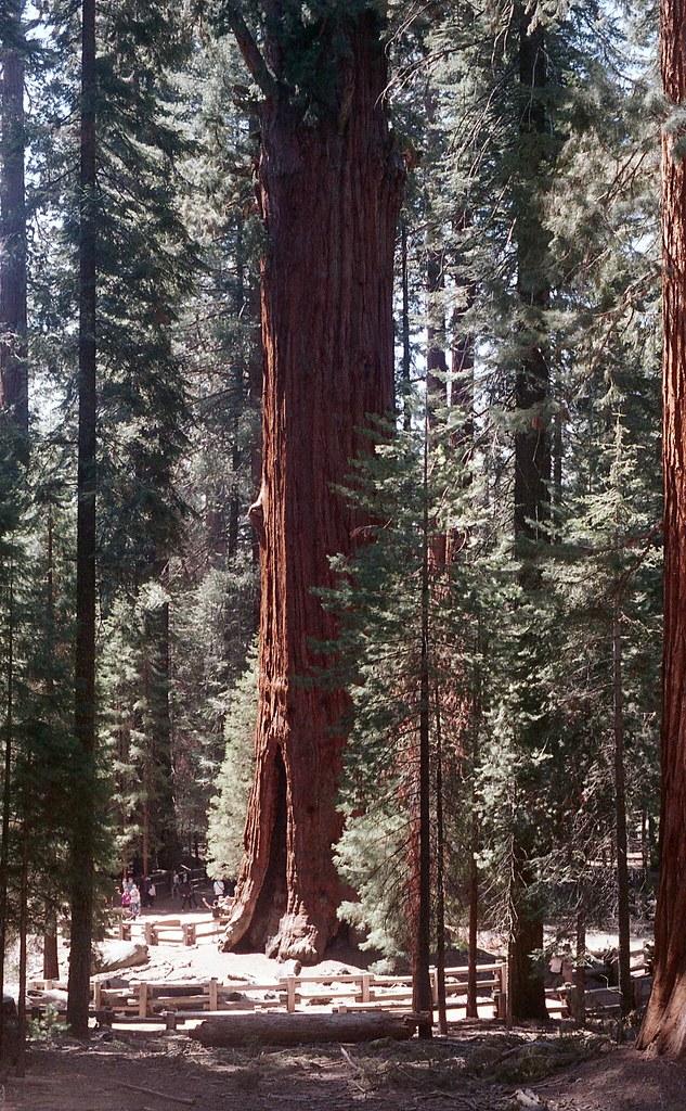 sequoia2015_009