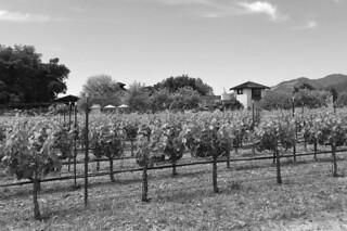 Landmark Vineyards - Vineyard