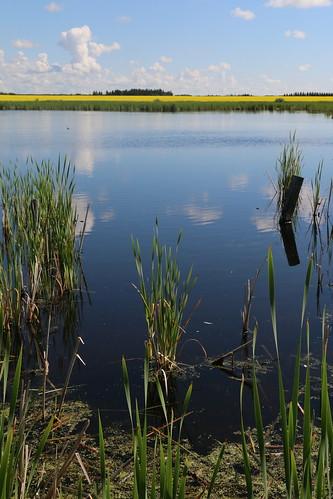 Prairie Reflections (SOTC 205/365)