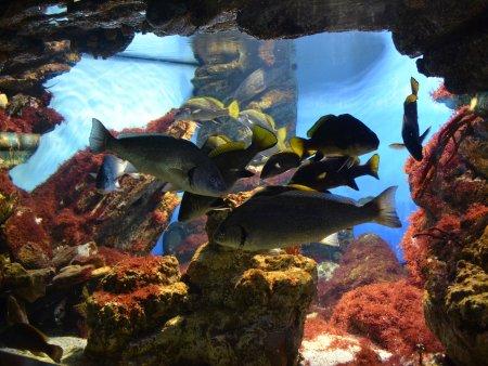 Aquarium Barcelona 2