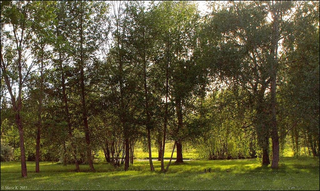 A l'ombre des arbres  16941738093_fd8cd9079e_b