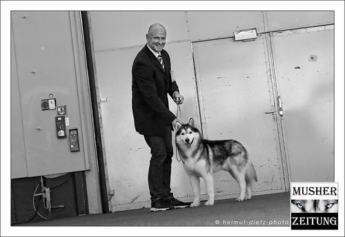 VDH Dog Show, Westfalenhallen Dortmund, Mai 2015 - Best-of-Breed: Siberian Husky