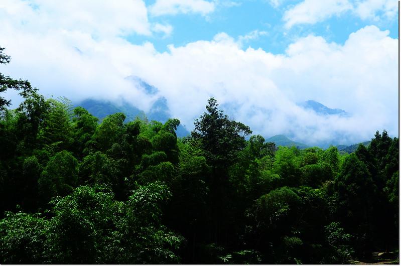 小半天竹林山景