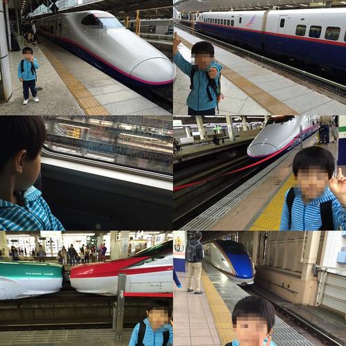 とらちゃん、初めて新幹線に乗る