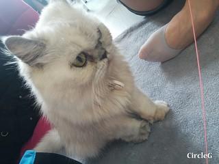 CIRCLEG CAT CAFE 貓貓地 香港 旺角 COOKING HEYHEY (14)