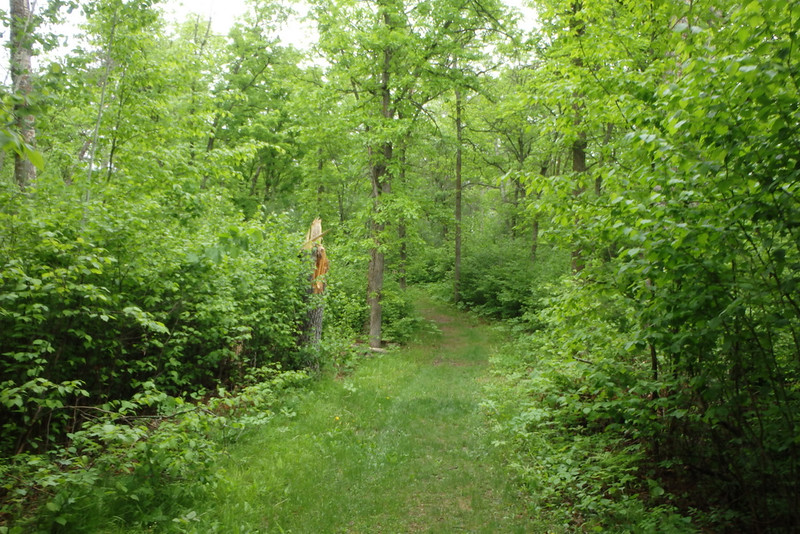 grassy trail through green trees