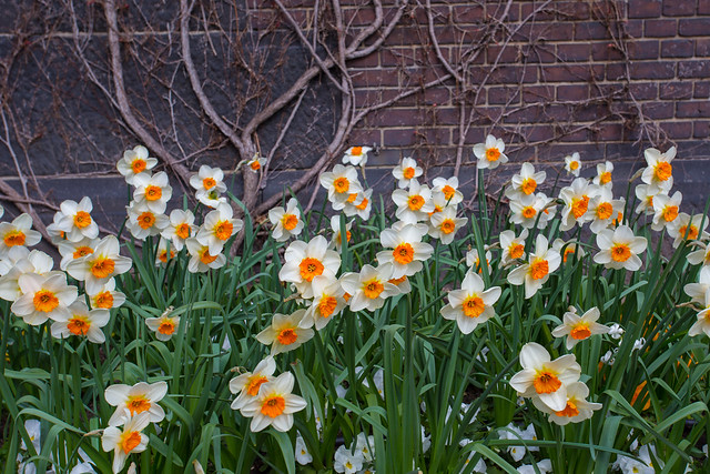 Rådhuspladsn Flowers