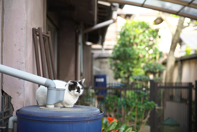 東京路地裏散歩 ネコ 2015年4月18日