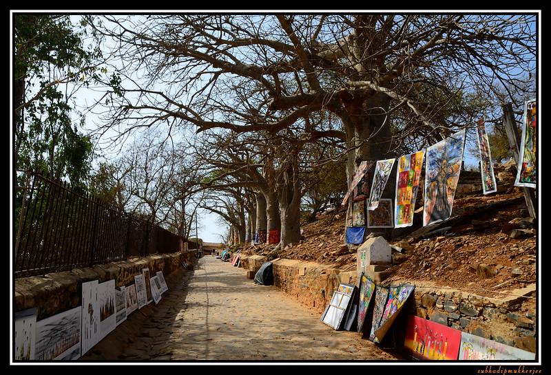 Goree Island - Baobab Trees