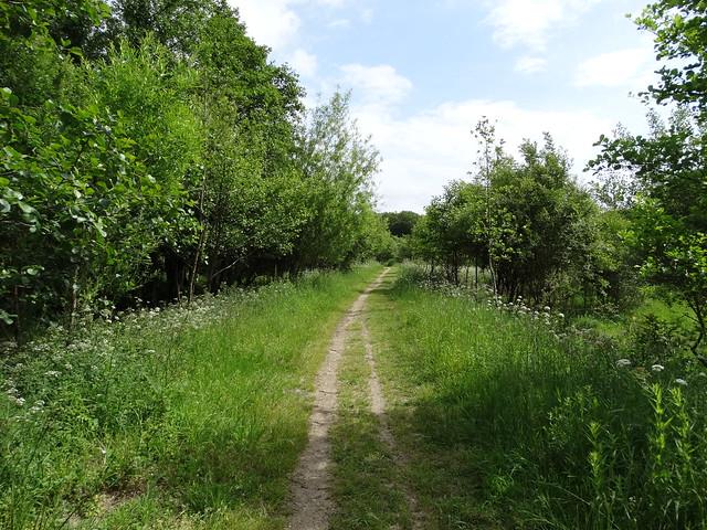 Camino en el Ruta dos Ríos de Cambre