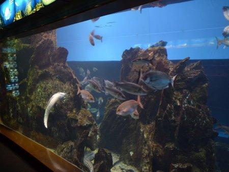 Aquarium Barcelona 1