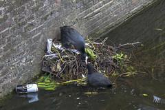 NEDERLAND - Delft 07