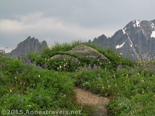 More wildflowers atop Sahale Arm, North Cascades National Park, Washington