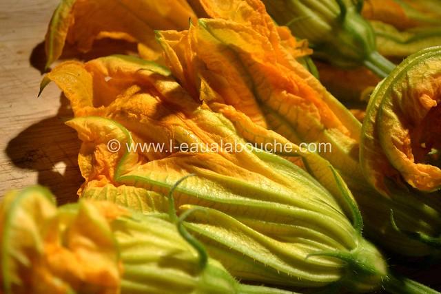 Beignets de Fleurs de Courgettes © Ana Luthi 02
