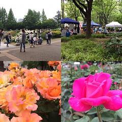 rose festa @ utsubo park #rose #utsubopark #osaka #japan