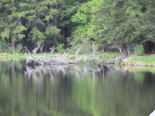 Lincoln (Hicks) Pond