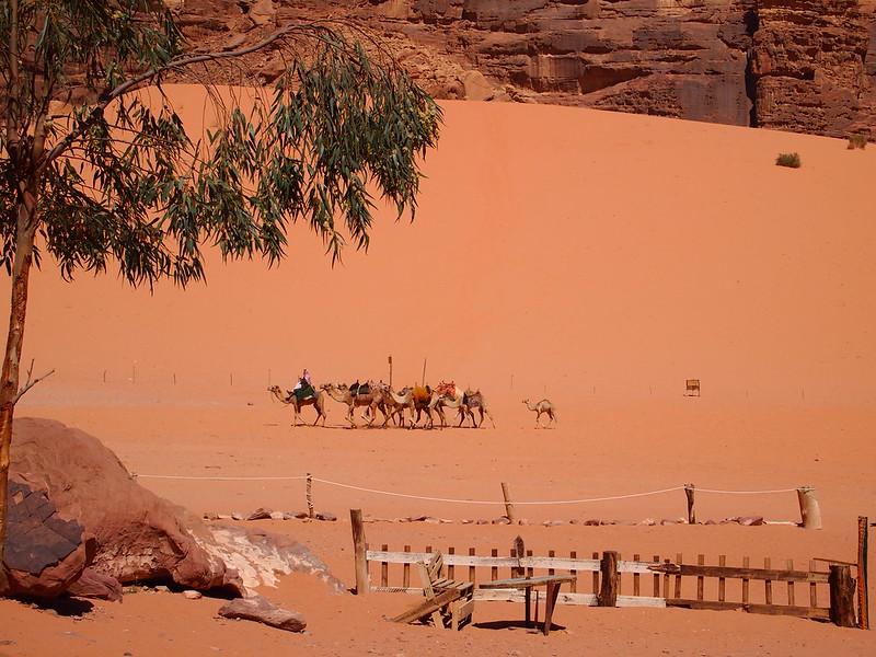 camel-trekkers