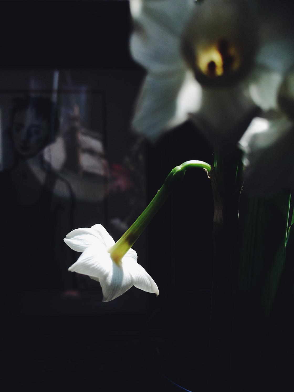 1 daffodil