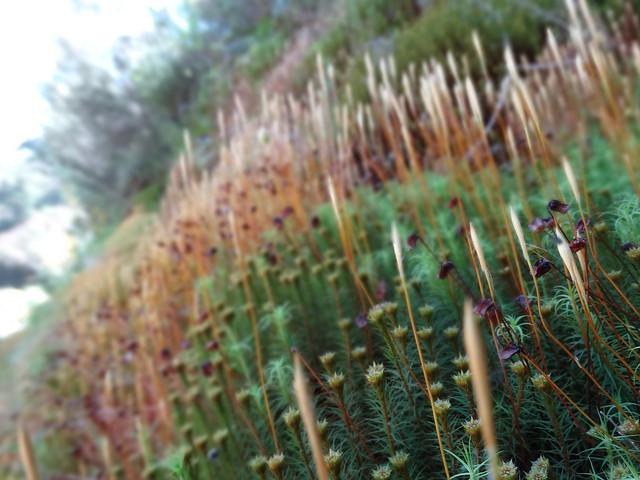 Vegetación en la ruta do Ferro de O Incio
