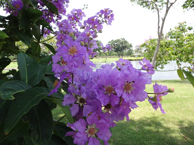 Flower at Royal Gems