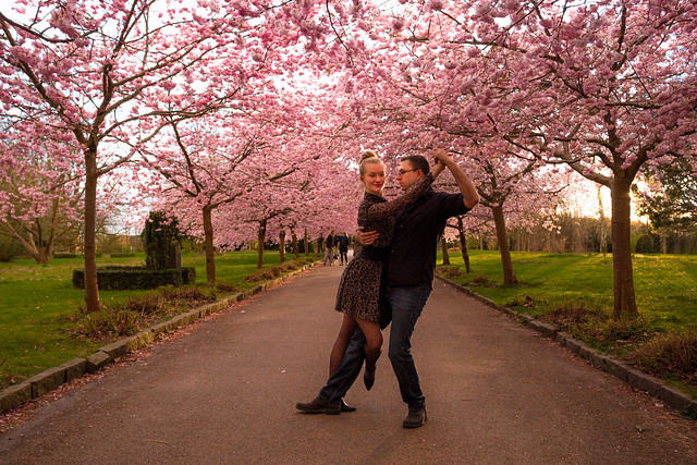 Dancing Beneath The Cherry Blossoms