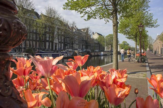 NEDERLAND - Amsterdam 120