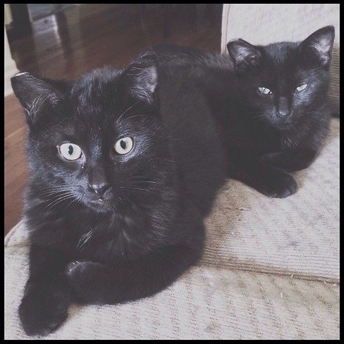 Seamus & Mei-Mei