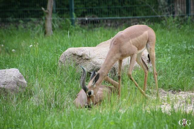 Tierpark Friedrichsfelde 10.05.201547