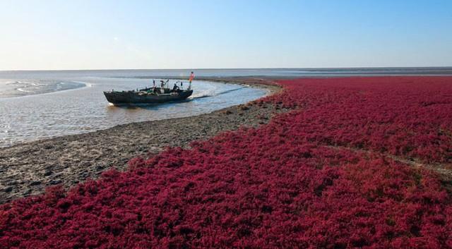 panjin-red-beach-china-4