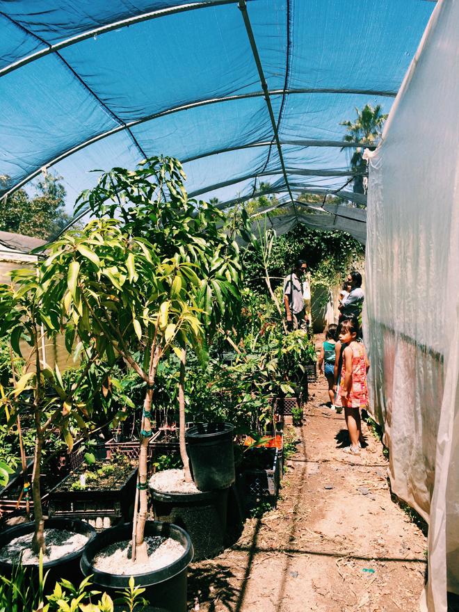 exotica nursery