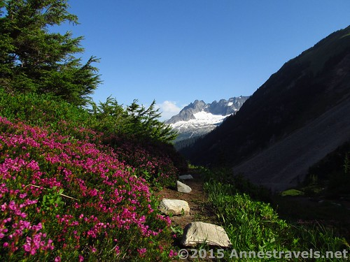 Wildflowers, trails, and mountains from near Cascade Pass, on the way up to Sahale Arm, North Cascades National Park, Washington