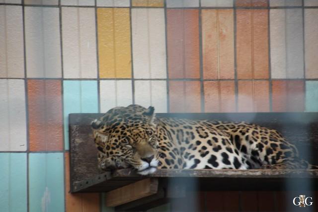 Tierpark Friedrichsfelde 17.05.201567
