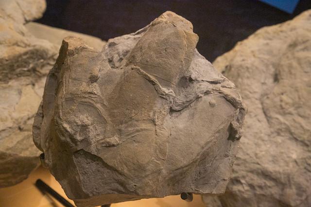 Museo de Jurásico de Asturias