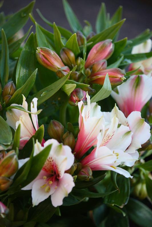 kukkaonnittelut
