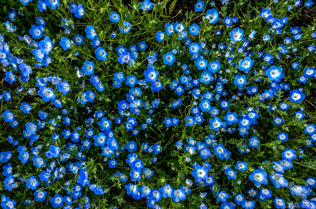 201505_flower.jpg