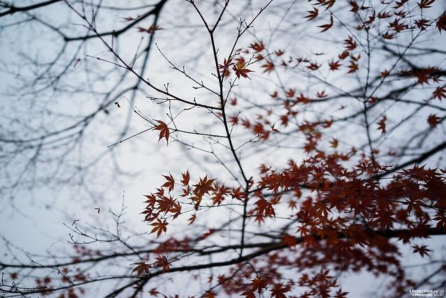 2014_Winter_Kyounomichi_EP6-3