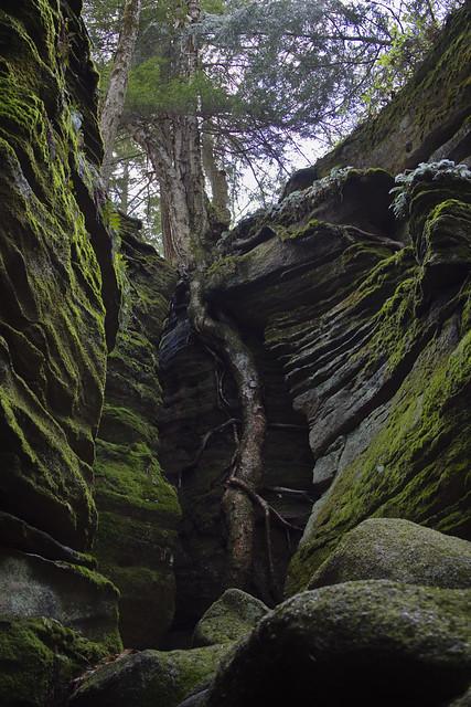 IMG_4510 Panama Rocks