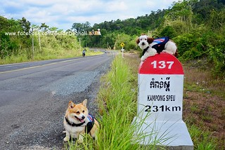 Unseen Cambodia เมื่อพาน้องหมาไปแรลลี่เที่ยวกัมพูชา ความอลเวงสุดประทับใจก็เกิดขึ้น