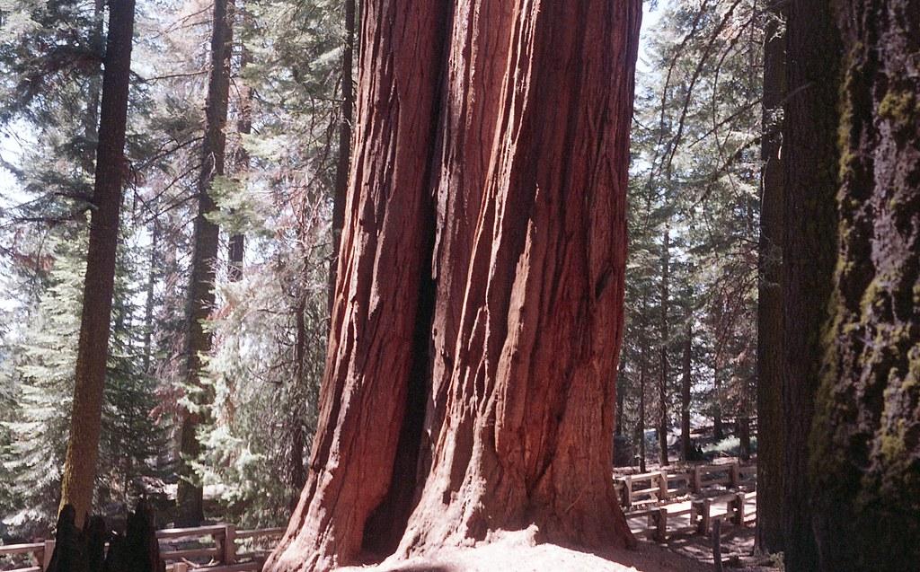sequoia2015_018