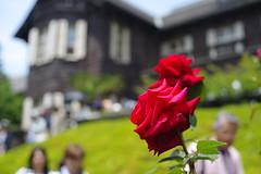 Rose festival 2016 in Kyu-Furukawa Garden