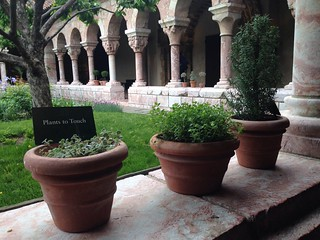 The Cloisters: Plants to Touch