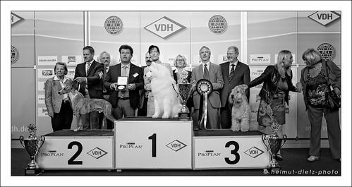 Best-in-Show: Samojede, VDH Dog Show Dortmund, Mai 2015
