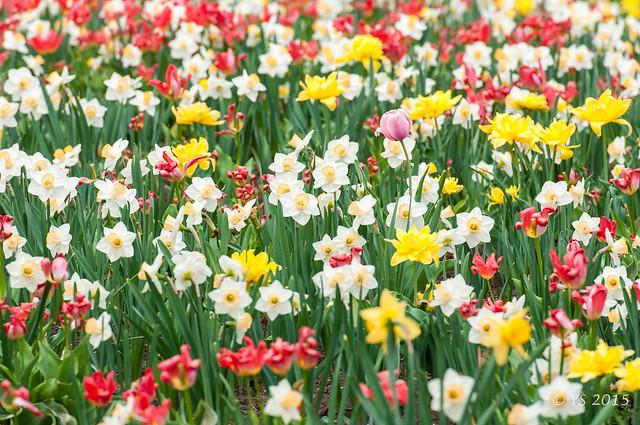Ottawa-fleurs-2015-90.jpg