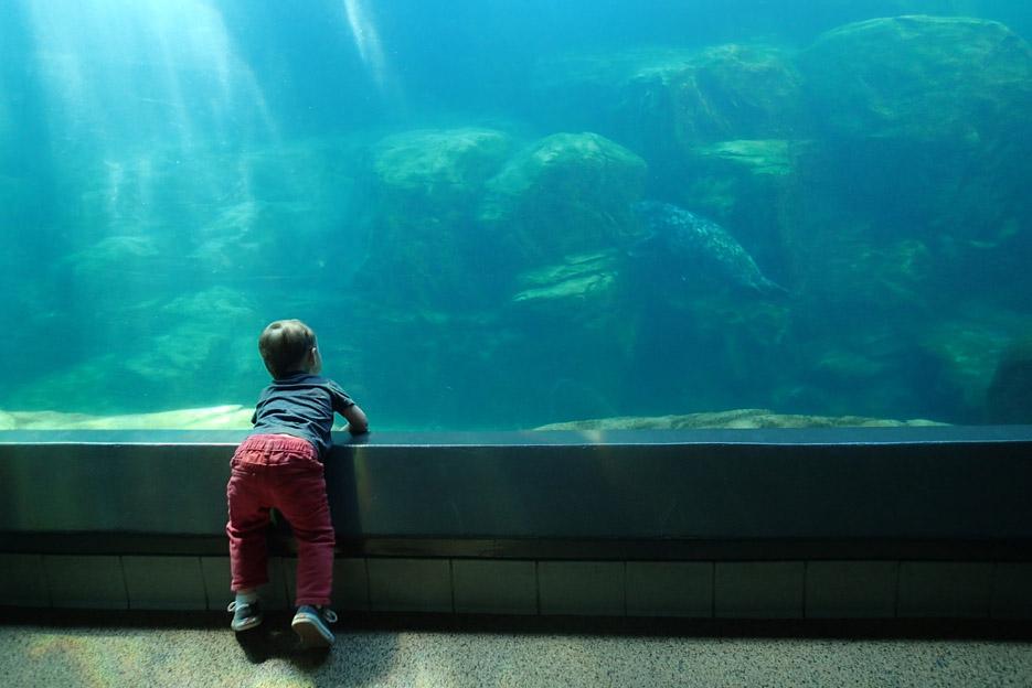 022415_aquarium08