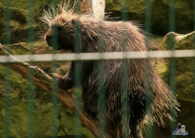 Tierpark Berlin 28.05.2016  0282