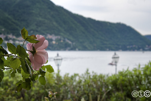Guardando il lago, Moltrasio. Lago di Como