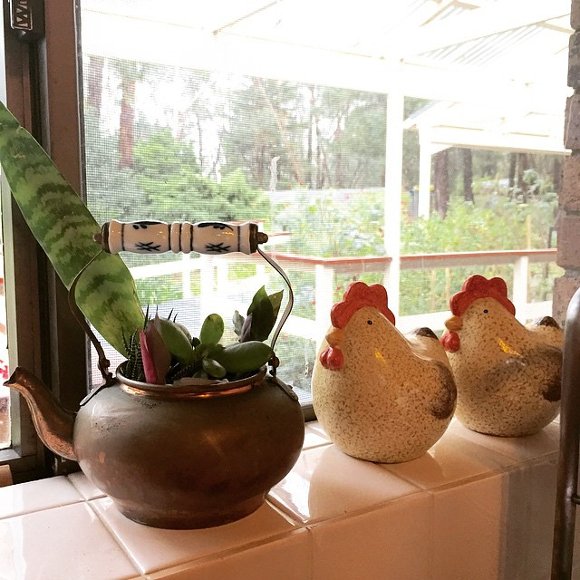 Latest Vintage / Op Shop Finds: pair of chooks and vintage copper teapot. Friend @uanfink1 outdid expectations when she turned it into a teapot garden! I had imagined just a succulent. Thanks, Sue. Now by the kitchen window and makes us all happy.