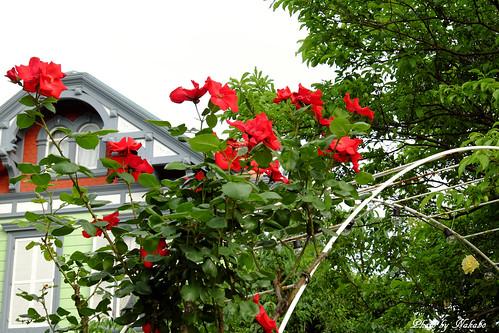 薔薇 -山手資料館-