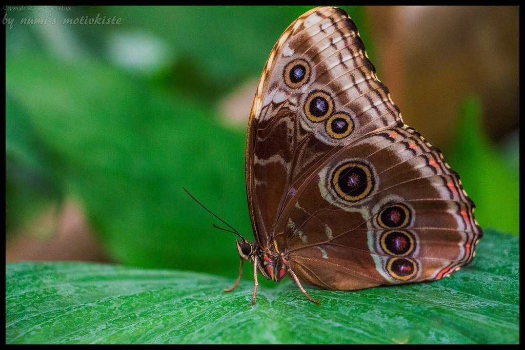 Schmetterling - Butterfly
